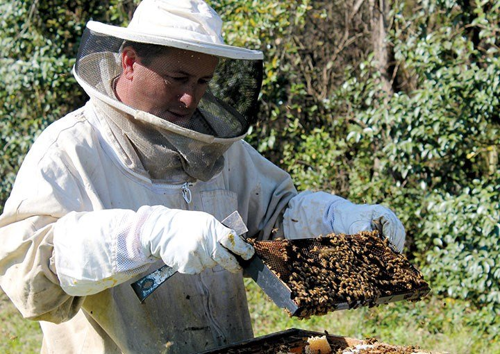 Danny Cannon, owner of Bee Trail Farm in Lexington, removes a hive frame from one of his hives. Scott Derrick's Blythewood Bee Co. offers various types of frames to beekeepers.
