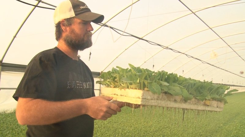 Cannon says their 6,000 square foot greenhouse is now the main source of income.