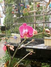 Jarrett's Jungle grows over 200 orchids year-round, which creates the perfect home for Sophie the lovebird and several other animal residents.