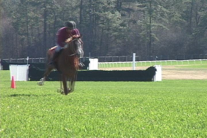 The horses train every day of the week.
