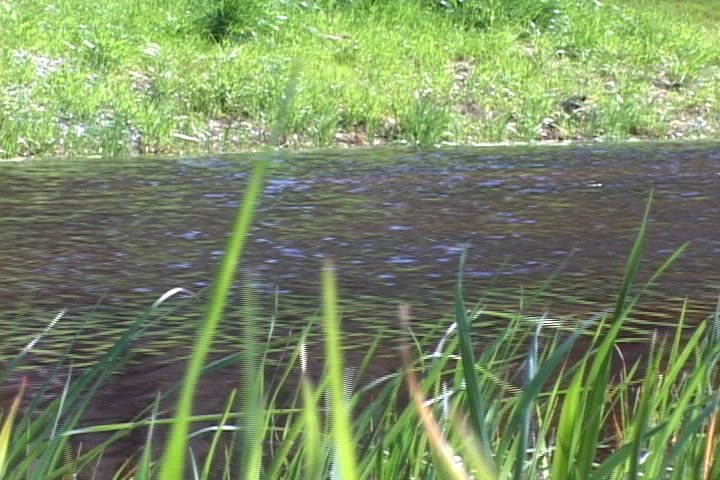 Visitors can expect to see vegetation that grows along Broad River
