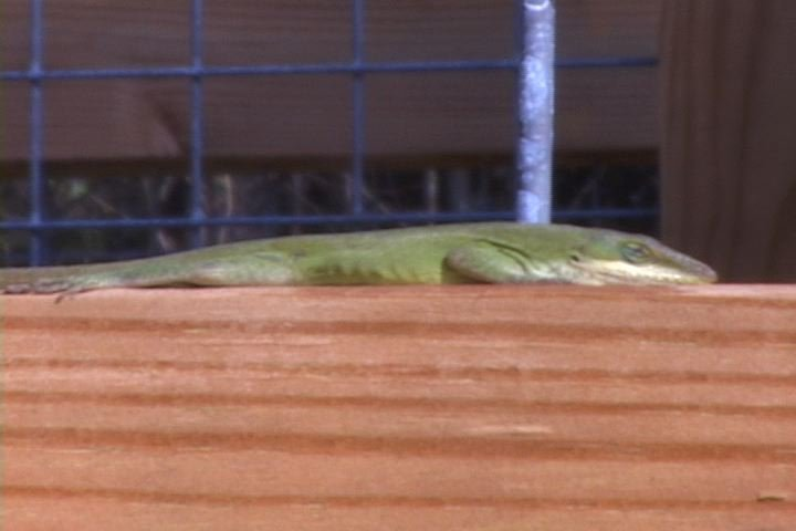 The park offers wildlife like this lizard that is sunbathing