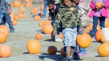Kids of all ages can choose any pumpkin of their choice from the pumpkin patch.