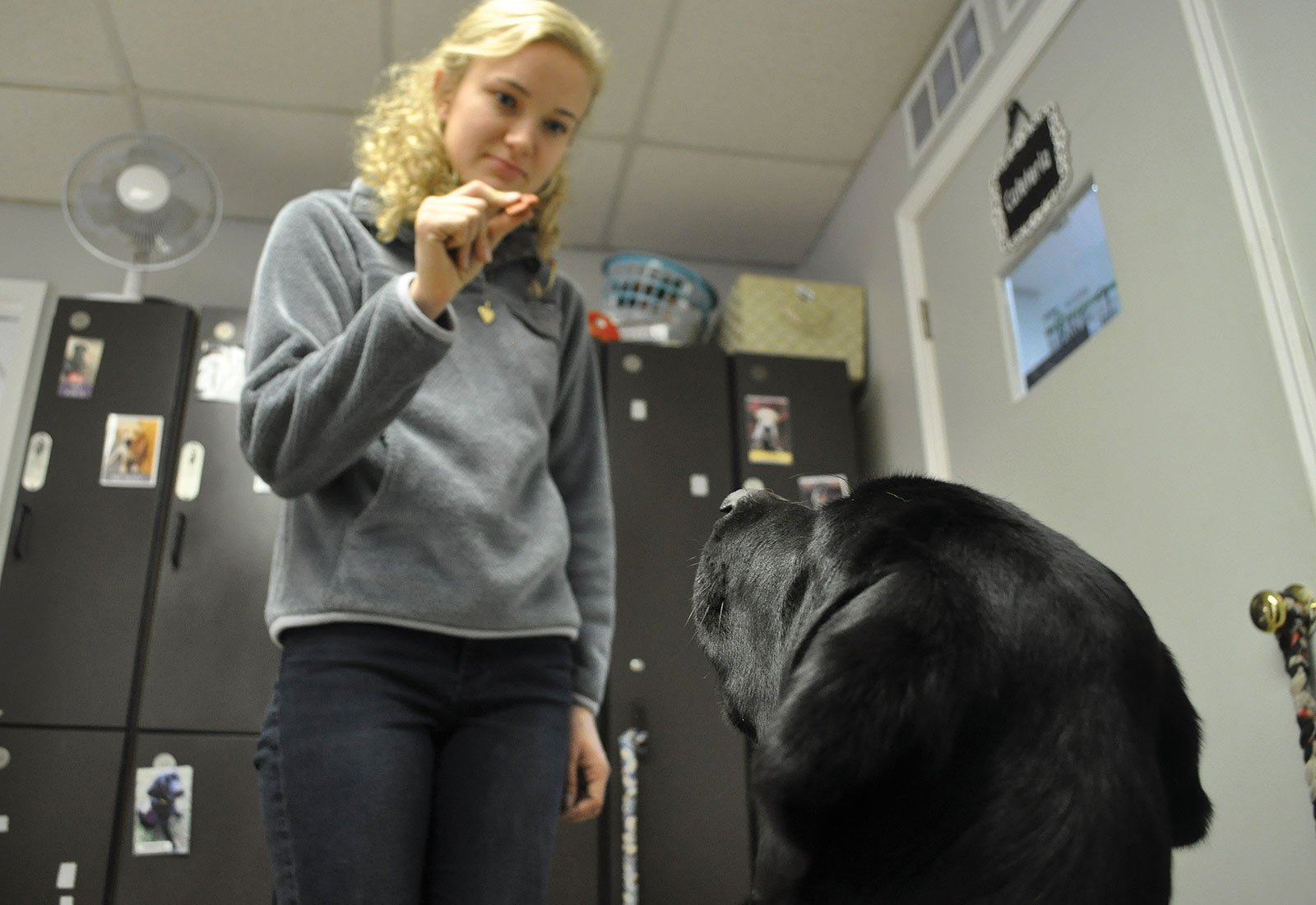 """Labrador and Golden Retrievers are successful service dog breeds because of their energy levels and temperments. """"It's really cool to see the person's demeanor changing as they see how the dog is going to help them,"""" said intern Rachael McGahee."""