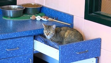 "A shelter cat relaxes in a draw in the ""Fat Cats"" room of the Columbia Animal Shelter."