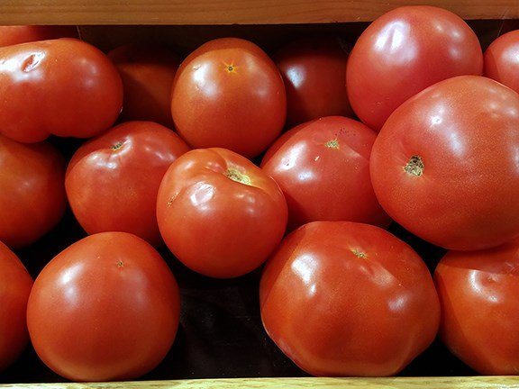 An anticipated early spring frost may prompt farmers to plant their spring crops, such as tomatoes, in the next few weeks.