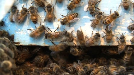 Beekeepers around the country are working to save their hives