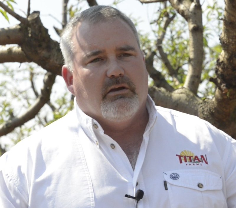 Chalmers Carr CEO & President of Titan Farms says his farm lost almost all of their peaches.