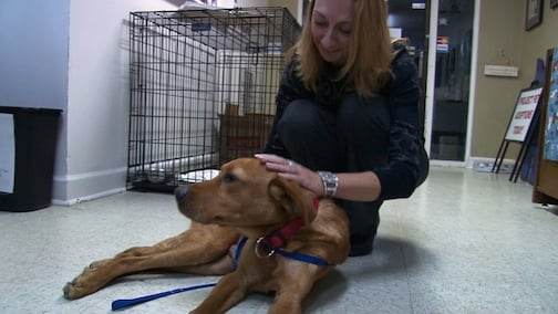 Foster Parent Laura Crisp and Hero get know each other.