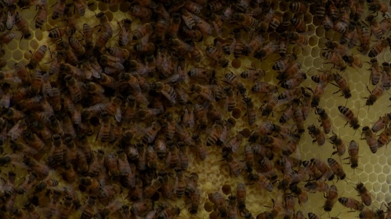 The Blythewood Bee Company removed this hive from a home in the Midlands earlier this week.