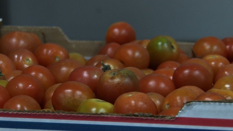 Winter weather has impacted the price of tomatoes.