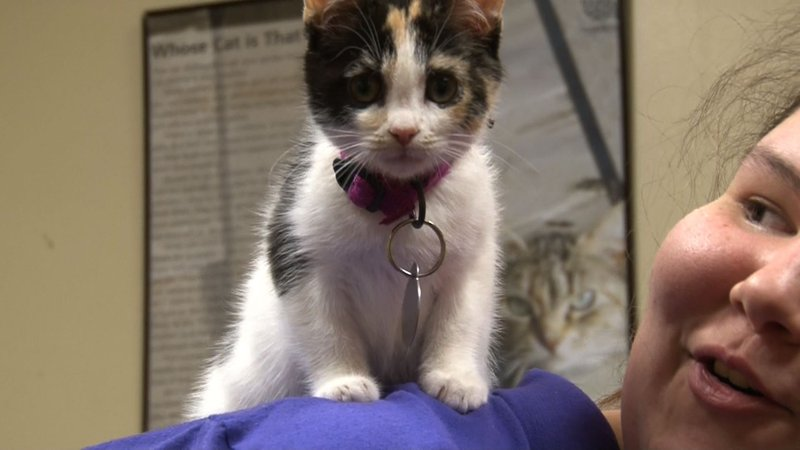 Pet's Inc. rescued this kitten from the City of Columbia's Animal Shelter.