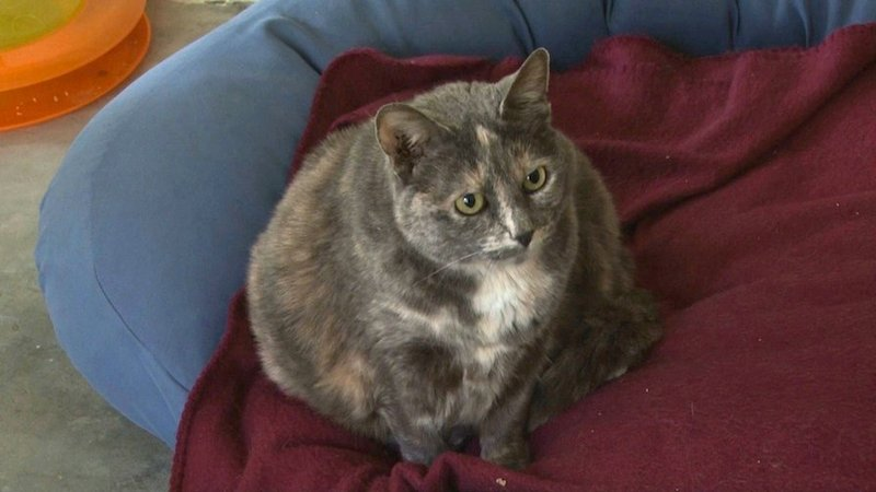 Luna is one cat available for adoption at Howlmore