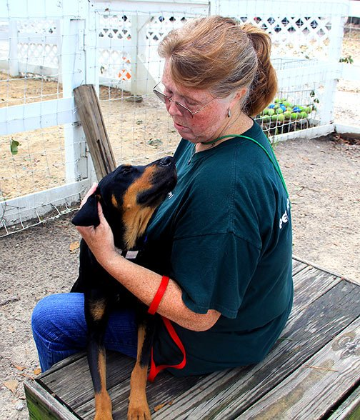 """Volunteer Denise Warren takes shelter dog Peter out for a walk.  """"Once you bring them outside, their whole demeanor changes. Look at him, he just wants love,"""" said Warren."""