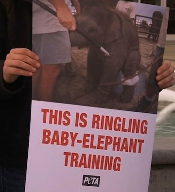 Ringling Bros. Circus was accused of mistreating Elephants by the US Agriculture Department.