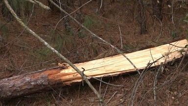 Tree limbs left behind from the winter storm are still causing problems along I-26.