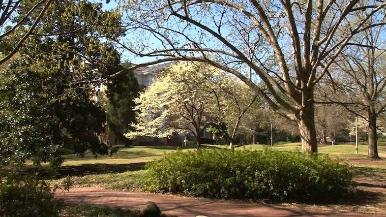 Now that Spring is here, all types of trees and flowers are spreading pollen.