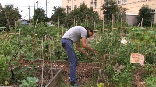 Seth Guest says a lot of Green Quad residents grow their own food in the garden.