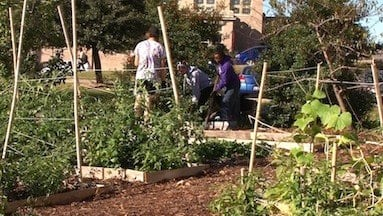 Students use the campus garden to grow their own fresh produce.