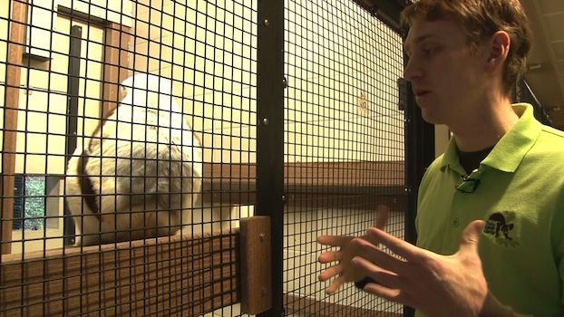 Smith says that lemur research is helping Duke learn more about human's capabilites when it comes to learning.