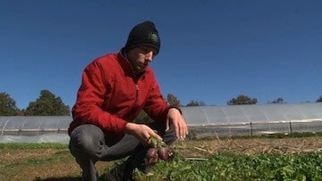Farm worker Bobby Weslowski says that radishes are protected from freezing temperatures by the ground