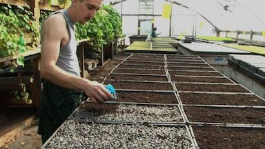 City Roots employee planting sunflower seeds for the spring season.