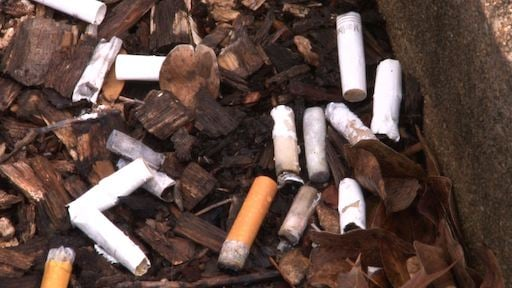 Cigarette butts found outside of USC Law School