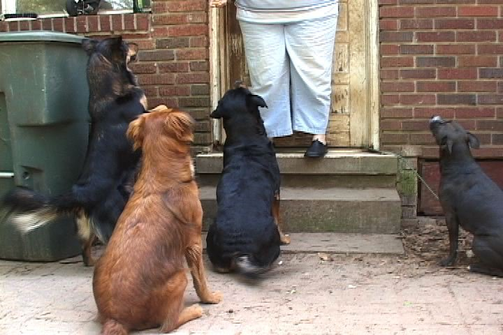 Owners of dogs like these could face tougher restrictions in Richland County.