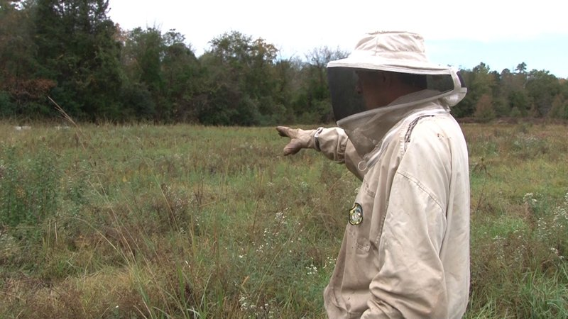 Danny Cannon shows the field where his bees usually gather food.