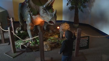 Boy interacts with dinosaur for the first time